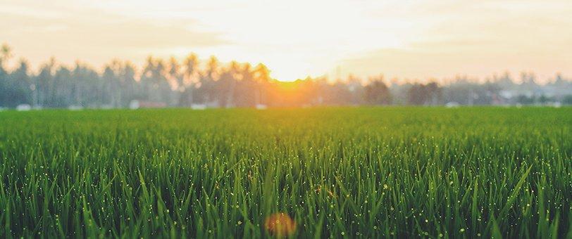 Grass with a sunset